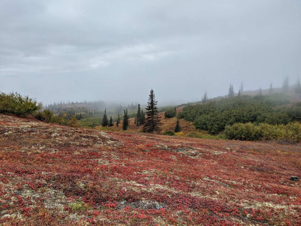 The Alaskan tundra bursts with color in autumn.