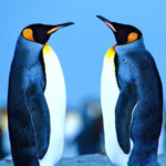 HAL Antarctica